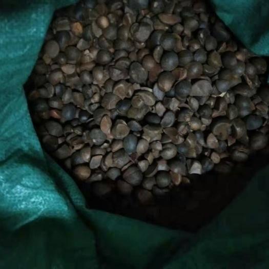 湖南省岳阳市平江县 野生茶籽,全干籽,出油率高。
