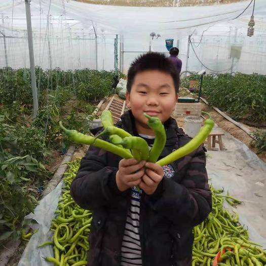 江西省贛州市寧都縣寧都黃椒 混裝通貨 微辣 橙黃
