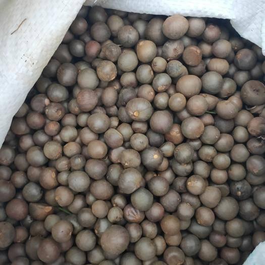 贵州省安顺市平坝区茶叶籽 大量供应