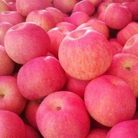 山西省临汾市隰县 红富士苹果,隰县红富士,玉露香,酥梨
