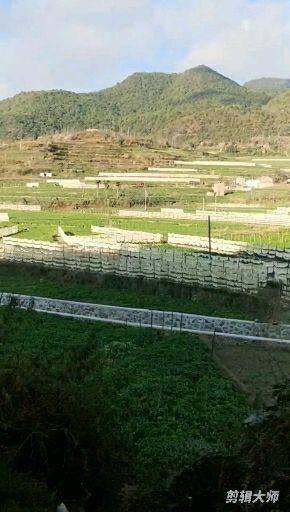 云南省红河哈尼族彝族自治州石屏县 脱水风干萝卜条