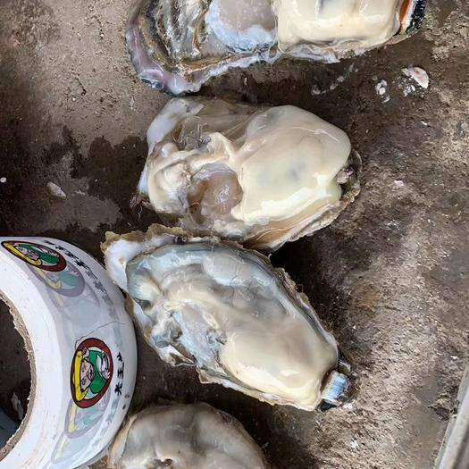 山東省威海市乳山市乳山牡蠣 海水 5-6兩/只 鮮活水產
