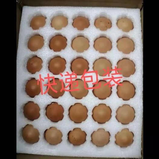 江蘇省宿遷市沭陽縣 廠家供應50到60克土雞種蛋 紅瑤種雞蛋三黃雞種蛋批發零售