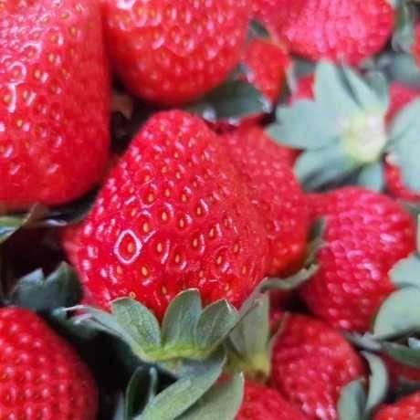 四川省凉山彝族自治州德昌县德昌草莓 凉山德昌黔莓