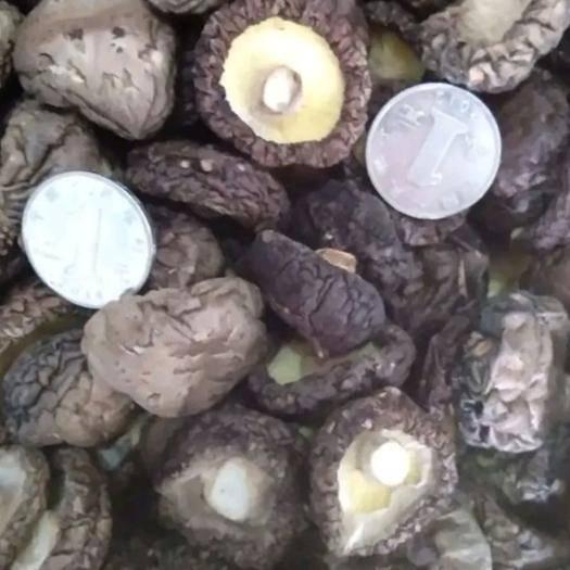 河南省驻马店市泌阳县 基地自产干香菇,平角,味香,肉厚