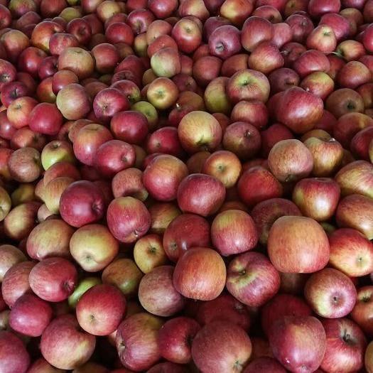 四川省雅安市汉源县红富士苹果 70mm以上 统货 光果