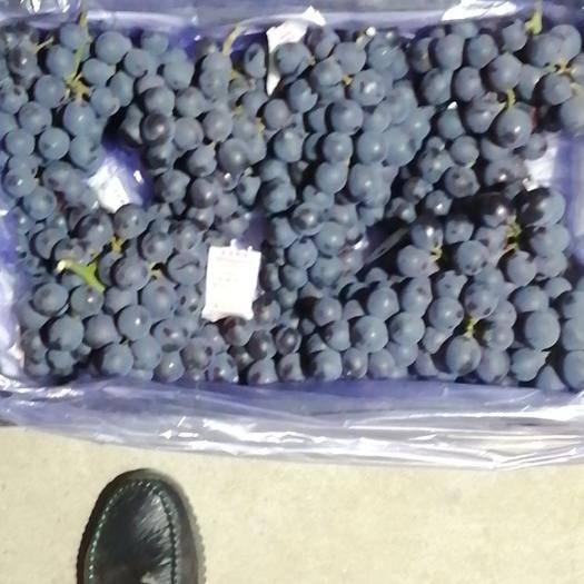 辽宁省锦州市北镇市巨峰葡萄 1.5- 2斤 5%以下 1次果