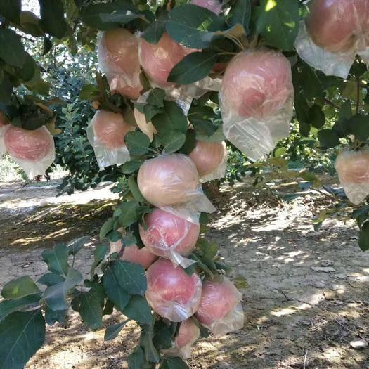 河北省石家庄市深泽县 富士苹果,口感脆甜,自然晒色,农户直供
