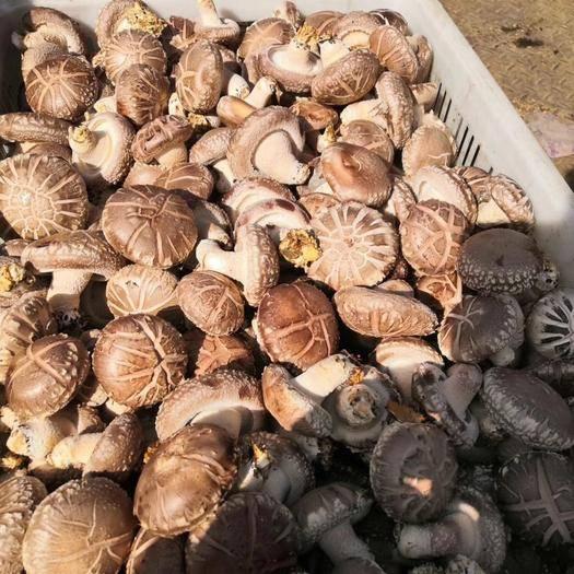 河南省三门峡市卢氏县普通香菇 欢迎各地老板前来考察下单量大从优