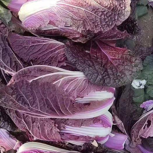 山东省淄博市张店区紫白菜 2~3斤 净菜