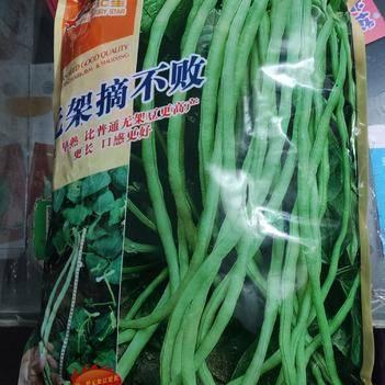 无架摘不败 豆角种子 2500克  早熟 更长 口感好