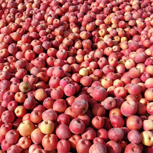 河南省郑州市中牟县阿克苏冰糖心苹果 80mm以上 全红 光果