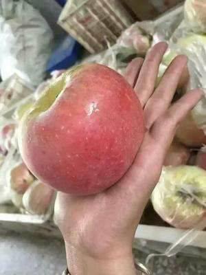 甩賣冰糖心蘋果