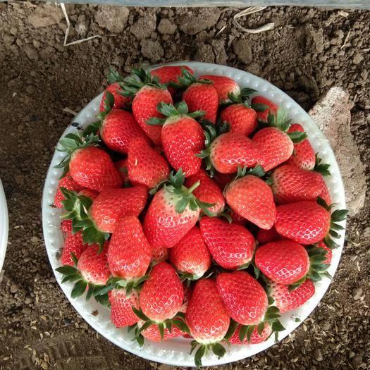 山东省济南市章丘区 甜宝草莓
