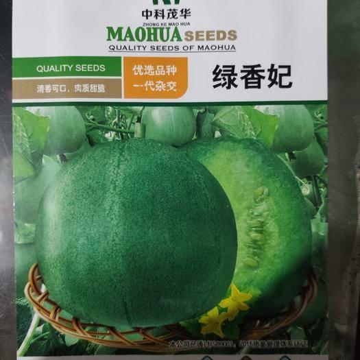 河南省商丘市夏邑縣 綠香妃  甜瓜種子 50粒