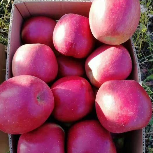 吉林省延邊朝鮮族自治州琿春市紅富士蘋果 95mm以上 統貨 光果