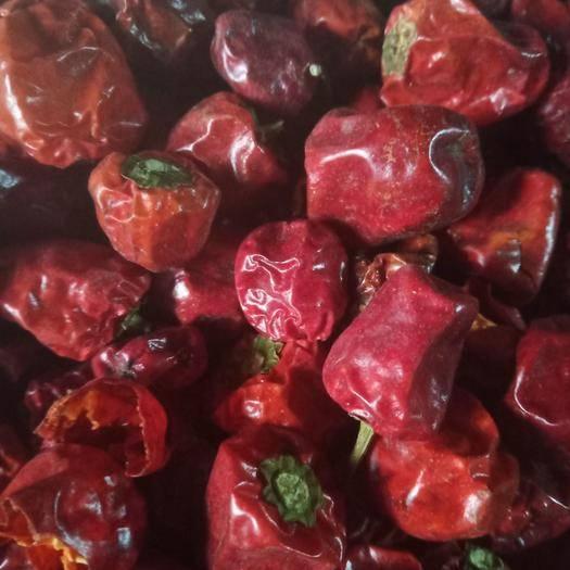 安徽省阜阳市太和县灯笼椒干辣椒 灯笼椒海椒量大优惠产地批发各种辣椒灯笼椒