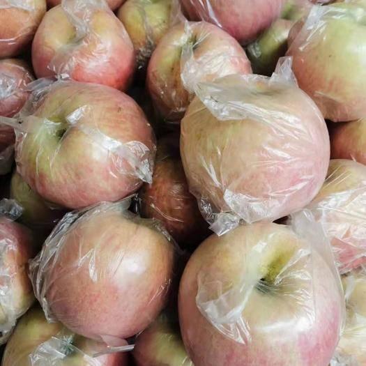 云南省昭通市昭阳区 红富士苹果70-80mm片红   大量供应