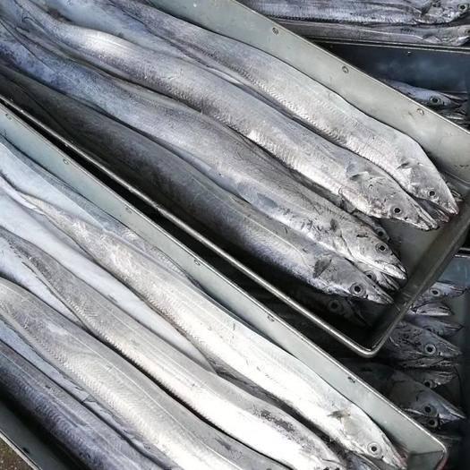 辽宁省大连市甘井子区 带鱼质量保证欢迎实地考察诚信做事