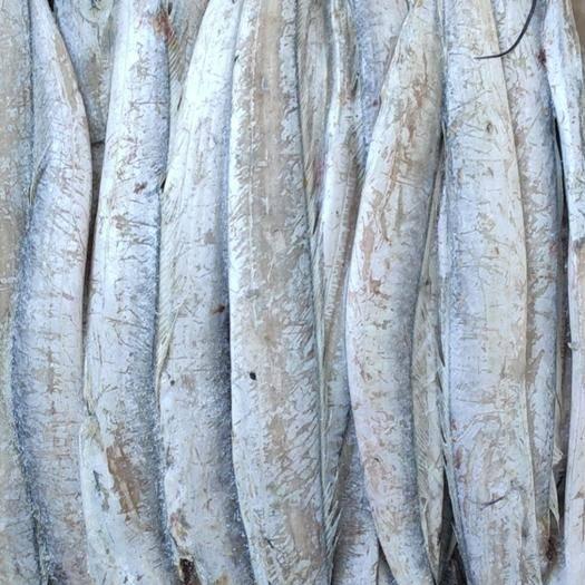 山东省威海市荣成市 威海本地带鱼 每箱20斤85元