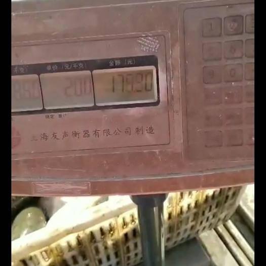 陕西省渭南市大荔县 黄河湿地淡水鱼草鱼