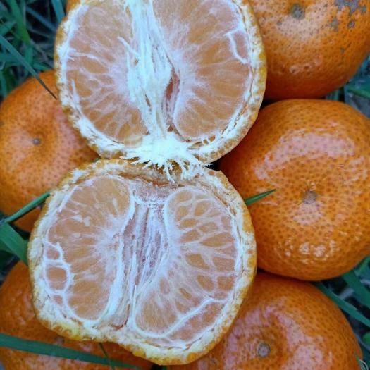 广西壮族自治区崇左市龙州县沙糖桔 广西砂糖橘带箱10斤装包邮