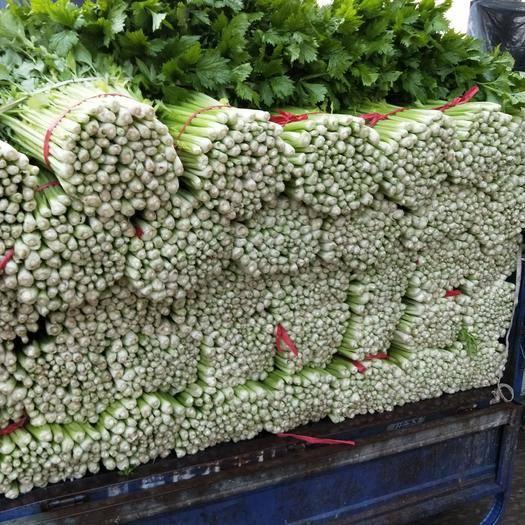 江苏省徐州市铜山区美国西芹 55~60cm 0.5~1.0斤 大棚种植