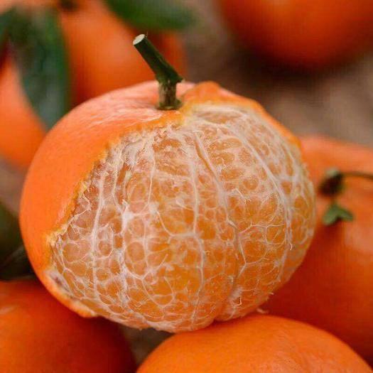广西壮族自治区崇左市龙州县 沃柑新鲜柑橘8斤装现摘现发包邮