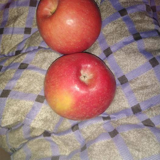 内蒙古自治区赤峰市宁城县红富士苹果 果大甜脆