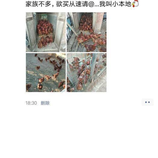 辽宁省锦州市凌海市 散养溜达鸡