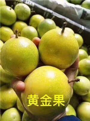广东省揭阳市揭西县 蓝稞黄金百香果