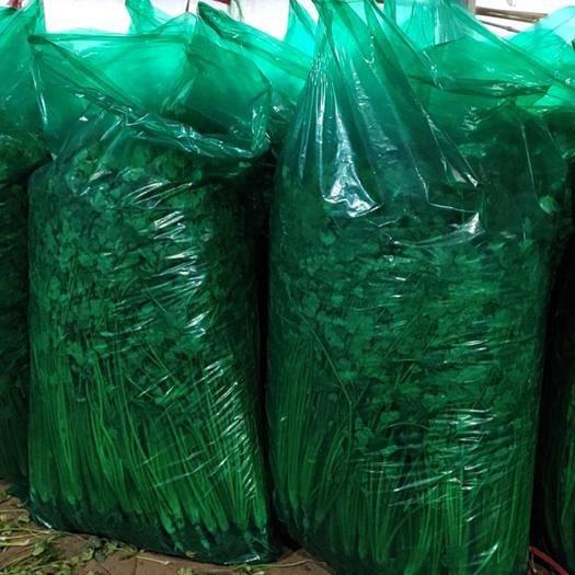 山东省潍坊市坊子区 香菜铁杆青香菜,无任何费用。上车价