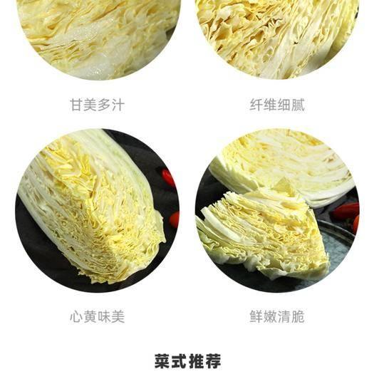 山東省青島市膠州市膠州大白菜 6~10斤 凈菜