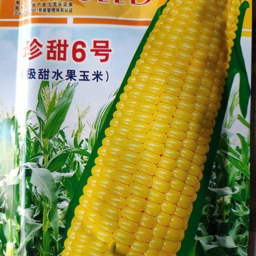 江西省上饶市余干县水果玉米种子 珍甜6号水果玉米 单果重500克粒金黄极甜 亩产1500千克