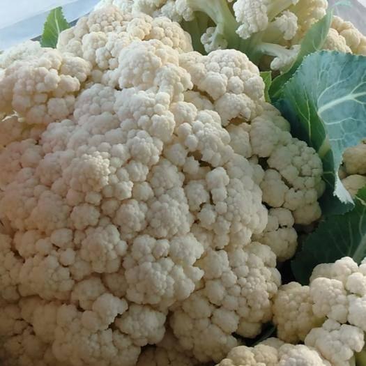 福建省厦门市同安区雪宝菜花 有机紧花菜,有机松花菜