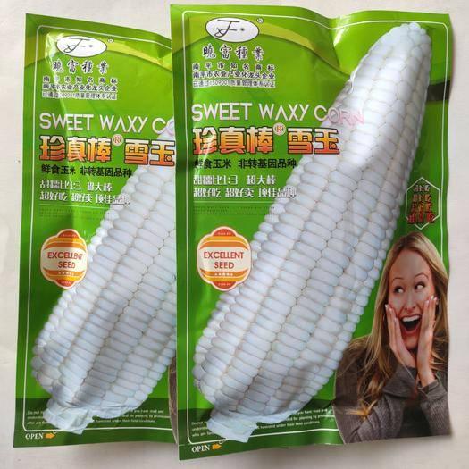 江苏省宿迁市沭阳县 糯玉米种子珍真棒雪玉白玉米种子甜玉米鲜食玉米种子