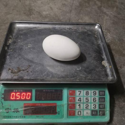 廣東省江門市恩平市鮮鵝蛋 去胎毒優良品