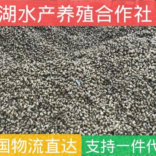 湖北省荆州市洪湖市小田螺 洪湖鲜湖水产优质饲料田螺,和食用田螺