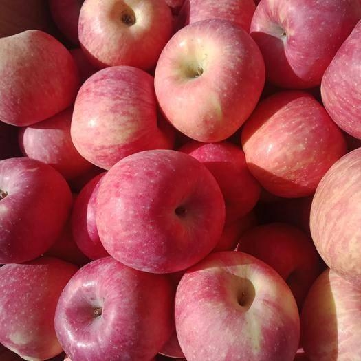 山西省臨汾市隰縣紅富士蘋果 水分大,甜度高,好吃不貴