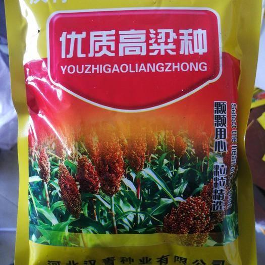 河北省沧州市青县高粱种子 常规种 ≥95%