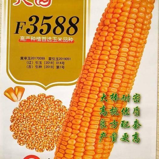 山东省德州市德城区 F3588玉米种子红轴大穗!蒙古西部,陕甘,云贵川,新疆种