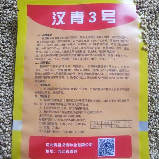 河北省沧州市青县高粱种子 汉青3号高粱种