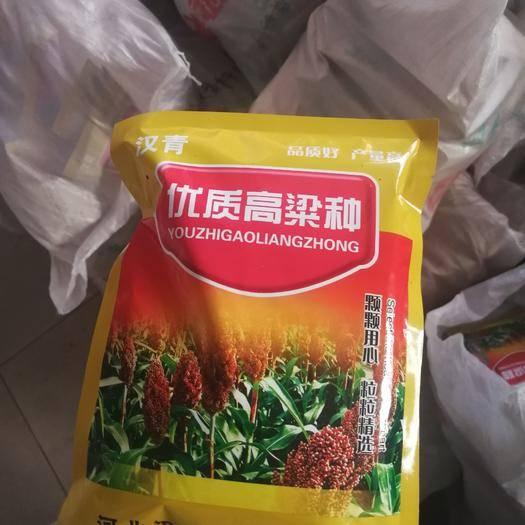 河北省沧州市青县高粱种子 青糯35高粱种
