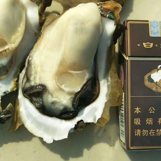 广西壮族自治区钦州市钦北区北部湾生蚝 大量产地直销