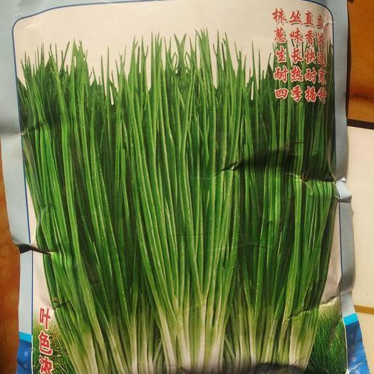河南省鹤壁市浚县小香葱种子 四季小香葱