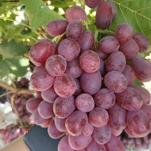 河南省安阳市北关区 包邮新疆红提新鲜提子葡萄有籽红提葡萄孕妇水果3/5斤装