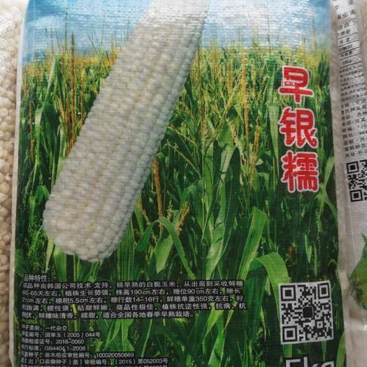 吉林省通化市梅河口市玉米种子 早糯白 大