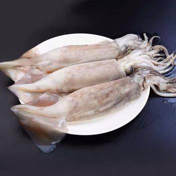 不挂冰大鱿鱼10斤起整只约1斤野生鱿鱼鲜活冷冻冰鲜烧烤海鲜