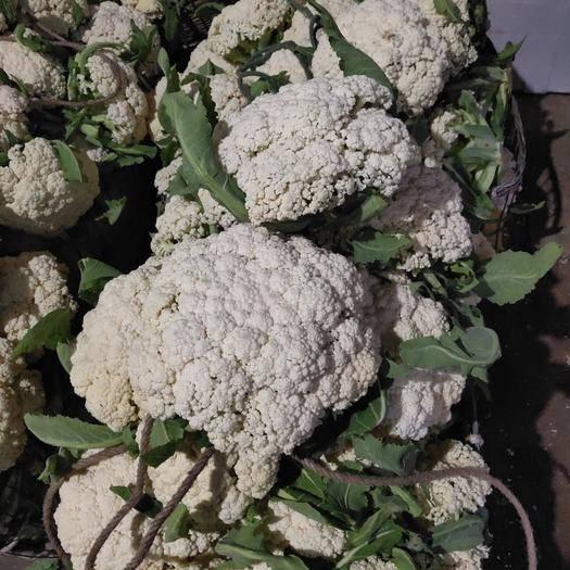 四川省内江市威远县有机花菜 适中 2~3斤