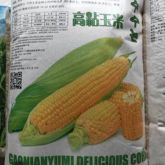 吉林省通化市梅河口市玉米种子 黄糯玉米